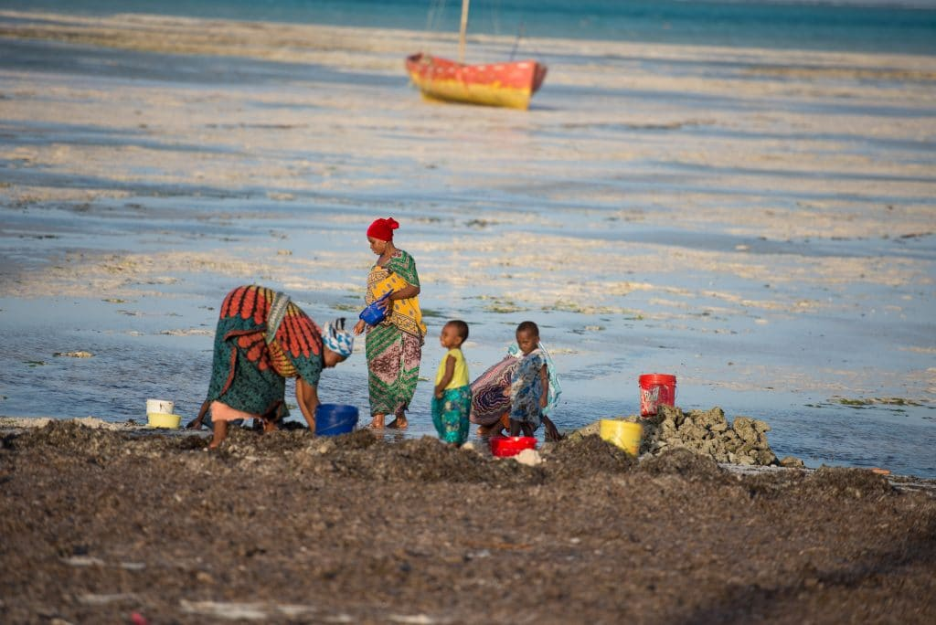 Women collecting shells for chago