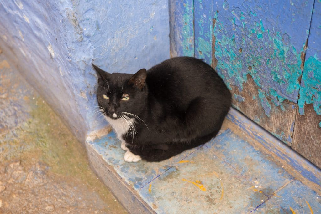 Chefchaouen cat black
