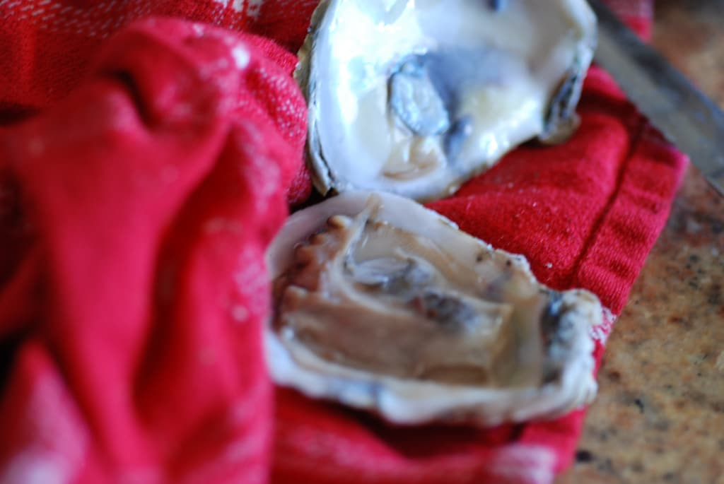 how to shuck an oyster-4