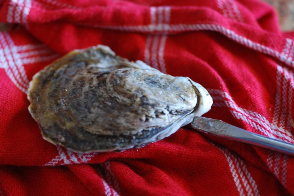 how to shuck an oyster-1