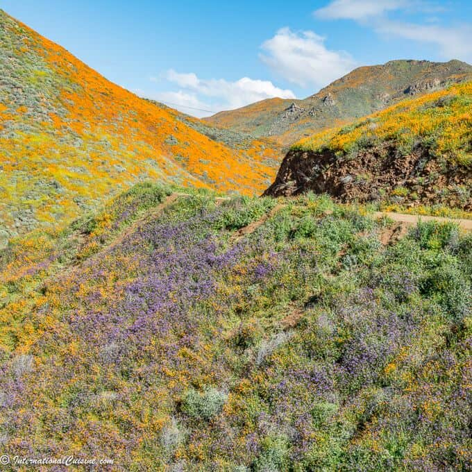 wildflowers at Walker Canyon