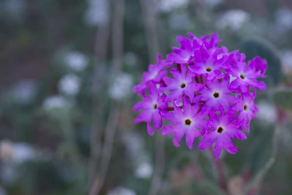 Purple wild flowet