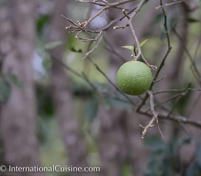 A picture of a green ripe orange
