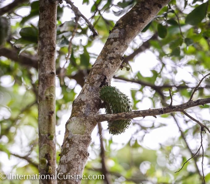 A picture of the unusual fruit called soursop